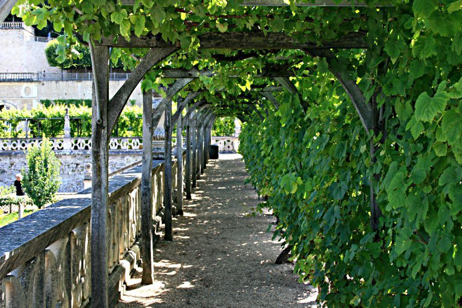 leafy pergola at Villandry