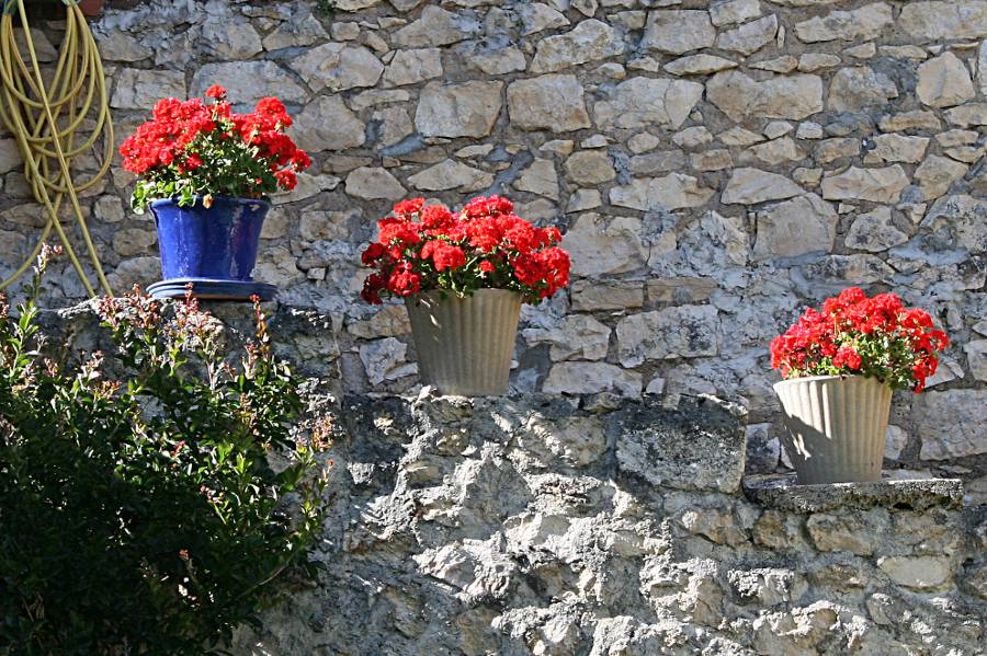 bright red geraniums in pots on stone steps