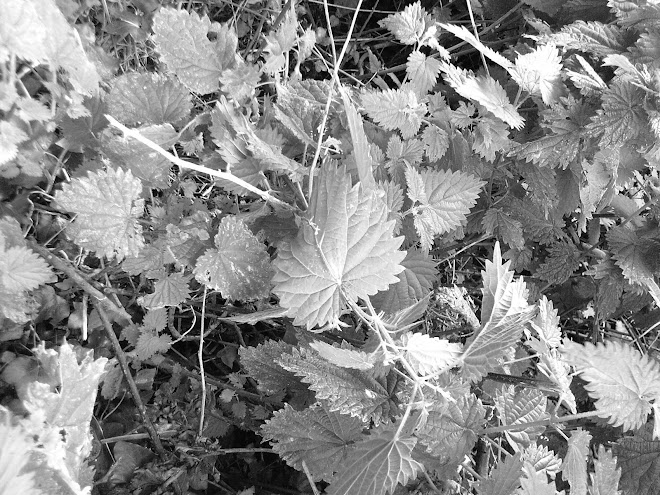 BLACK AND WHITE NETTLES