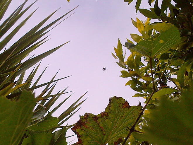 SPIDER AGAINST THE SKY