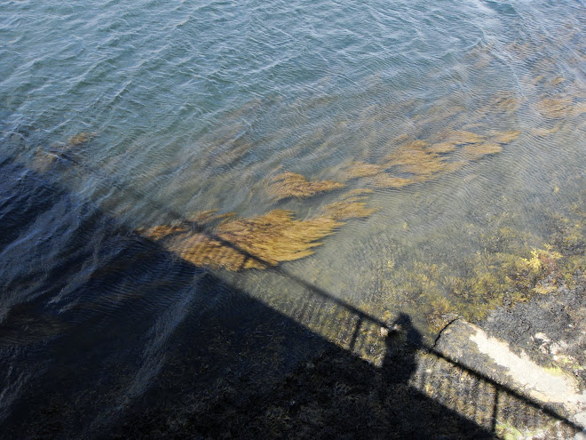 SHADOWS FROM A BRIDGE AND WEED