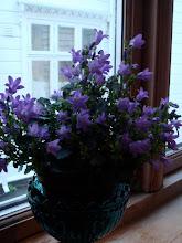Flott blomst i vinduet