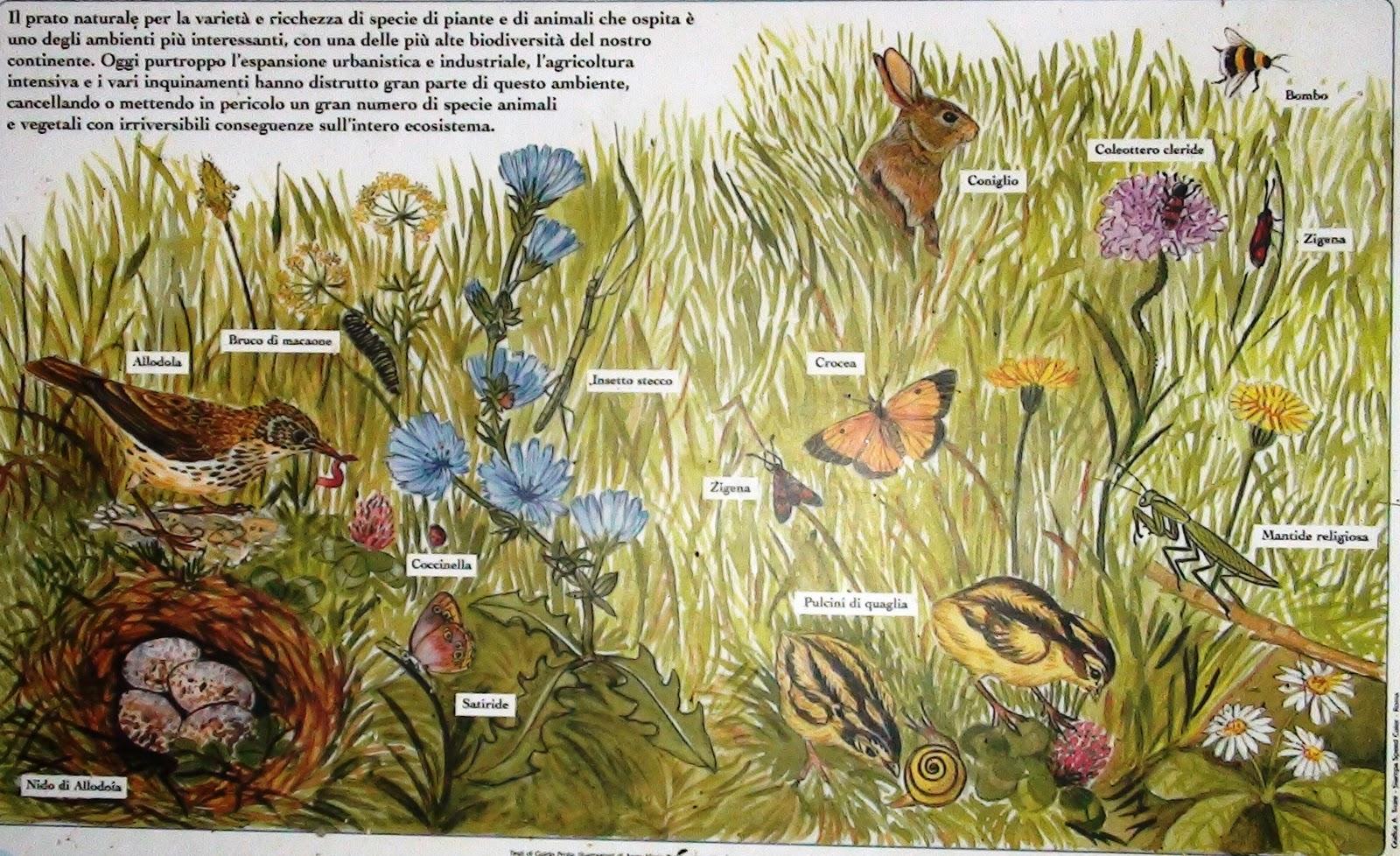 Biodiversity Experiences Biodiversity