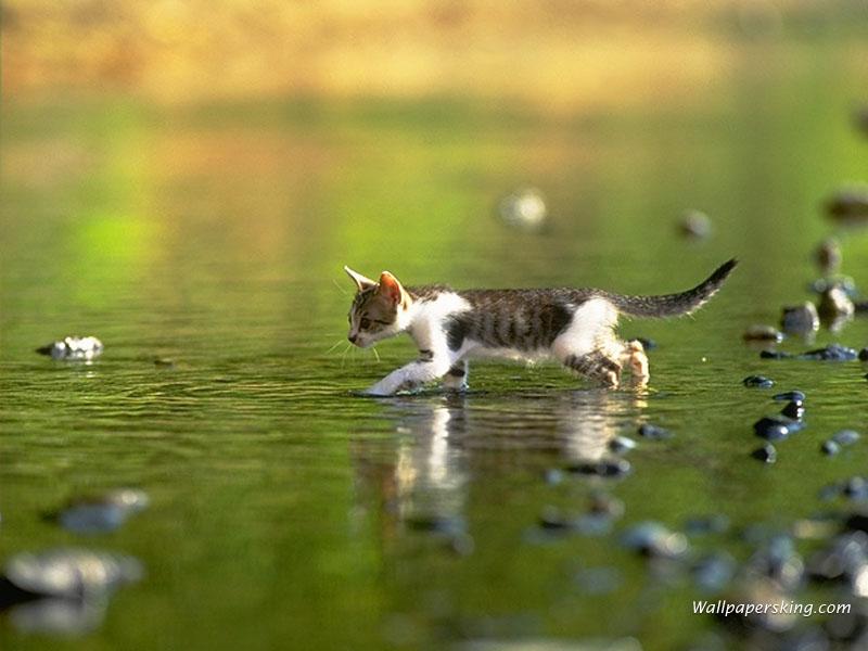 Kimochiku Kumpulan Wallpaper Kucing Lucu Loh