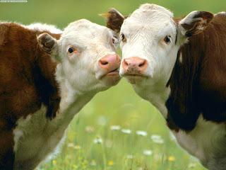 La genética: tarea indispensable de la ganadería