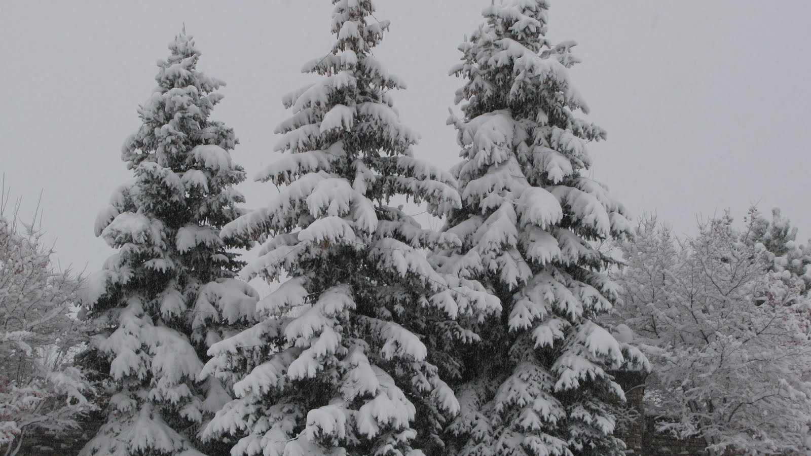 [Snowy+trees.jpg]
