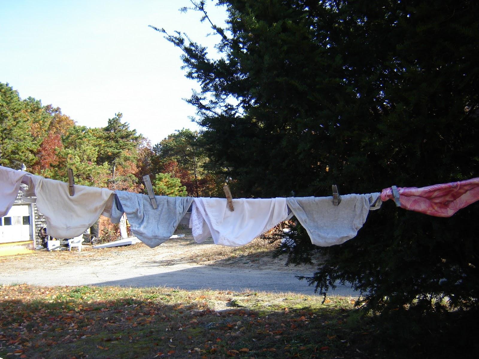 panties in a tree Getting My Panties In a Bunch