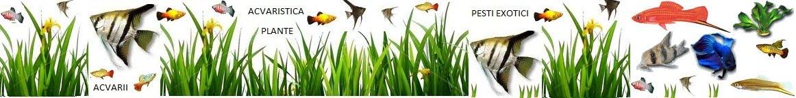 Acvaristica, pesti, plante