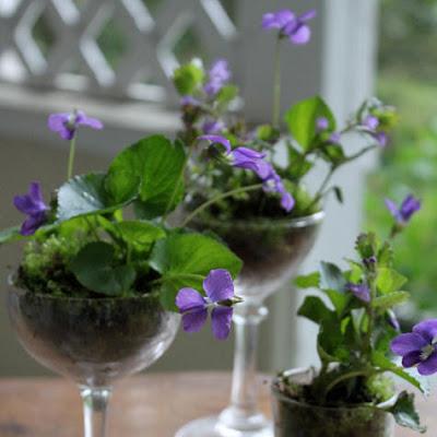 plantas en macetas de cristal