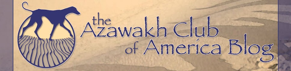 Azawakh Club of America Blog