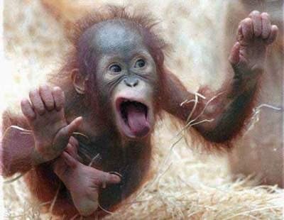 Funny Images Of Monkeys. Funny Pictures Of Monkeys