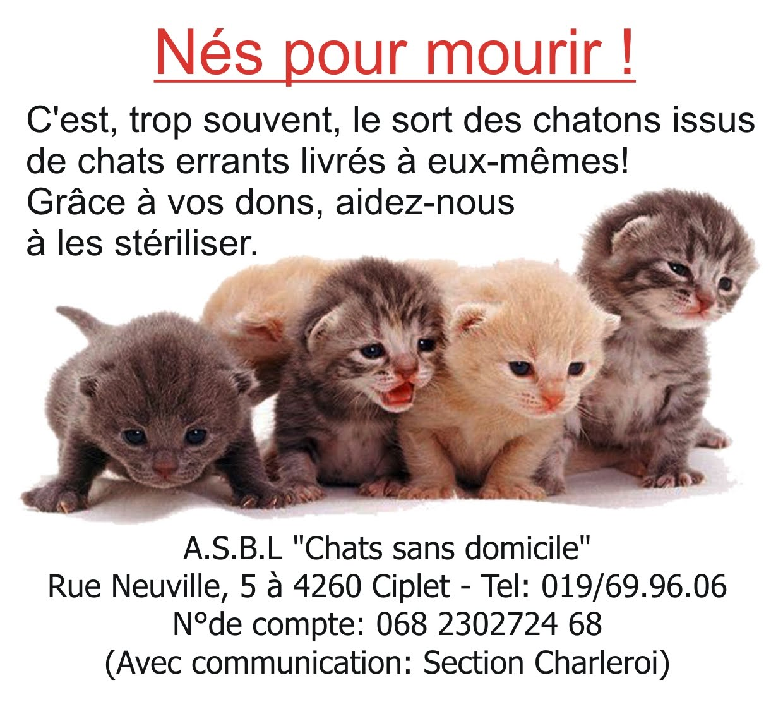 charleroi chat Résultats de la recherche pour 6000 charleroi, hainaut.
