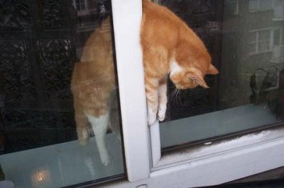 S curiser son int rieur - Protection fenetre chat ...