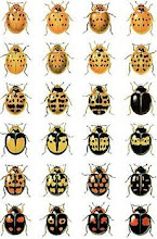 HARLEQUIN LADYBIRDS ...