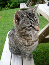 THE GREAT DIXTER CAT ...