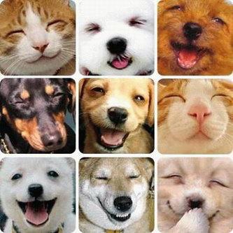 Sonreir  no cuesta nada.