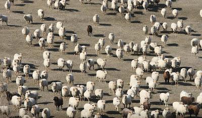 Ce înseamnă să fii cioban