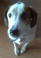 Scrooge the walker hound blogger