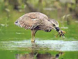 Hoy Tlad Bird park