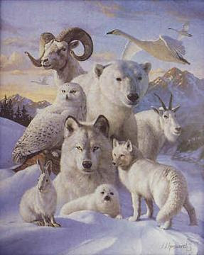 white wolf spirit guide meaning
