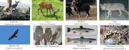Cap.1 - Gli animali dell'alto Appennino