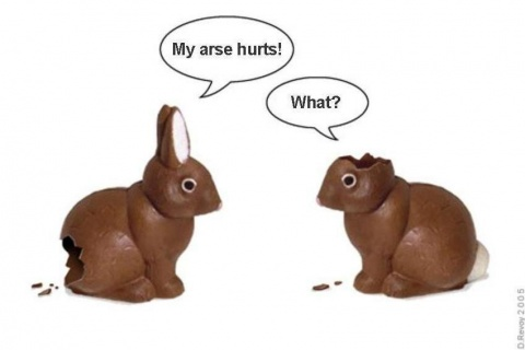 easter bunny pictures funny