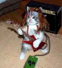 Toque engraçado - Miau do Gato do Pânico Gato-engracado-panico-tv-funny-cat