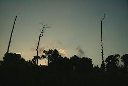 Perfil de la Selva Amazònica