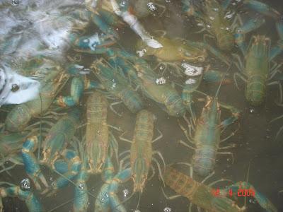 Casacelis el alimento del futuro for Criadero de pescado