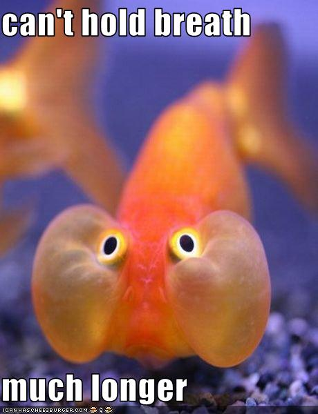 Blogging For Brady Drowning Fish