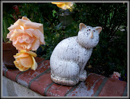 Roses & garden cat