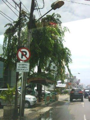 Pohon Rindang Unsur Pencegah Banjir