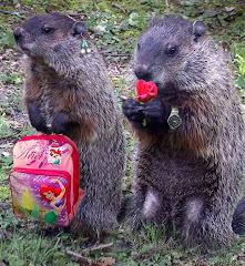 Vida de marmotitas