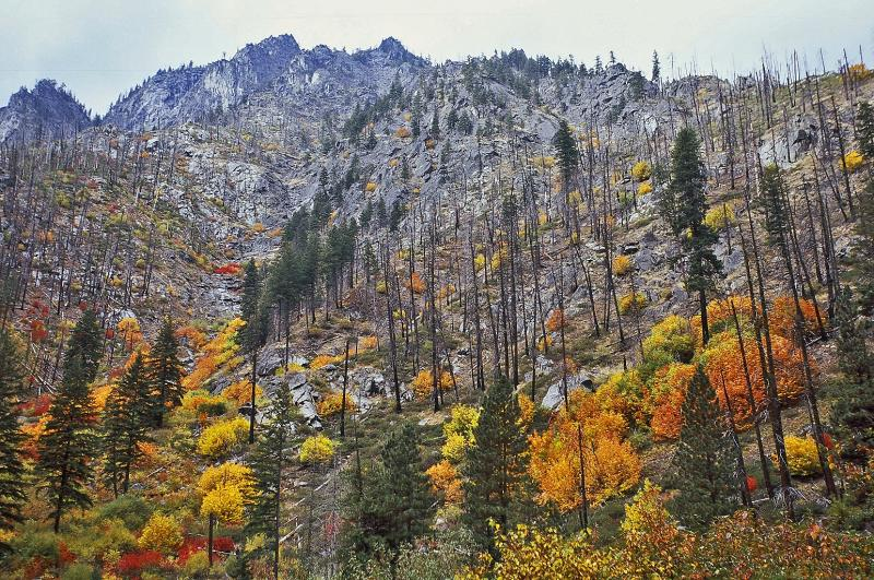 ... I Am Still Excited To Gaze Upon The Sumacs In Their Brillant Red Fall  Color And The Aspen Grove Turned To A Golden Yellow From The Warmth Of The  Spa.
