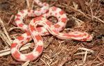 i love snakes!