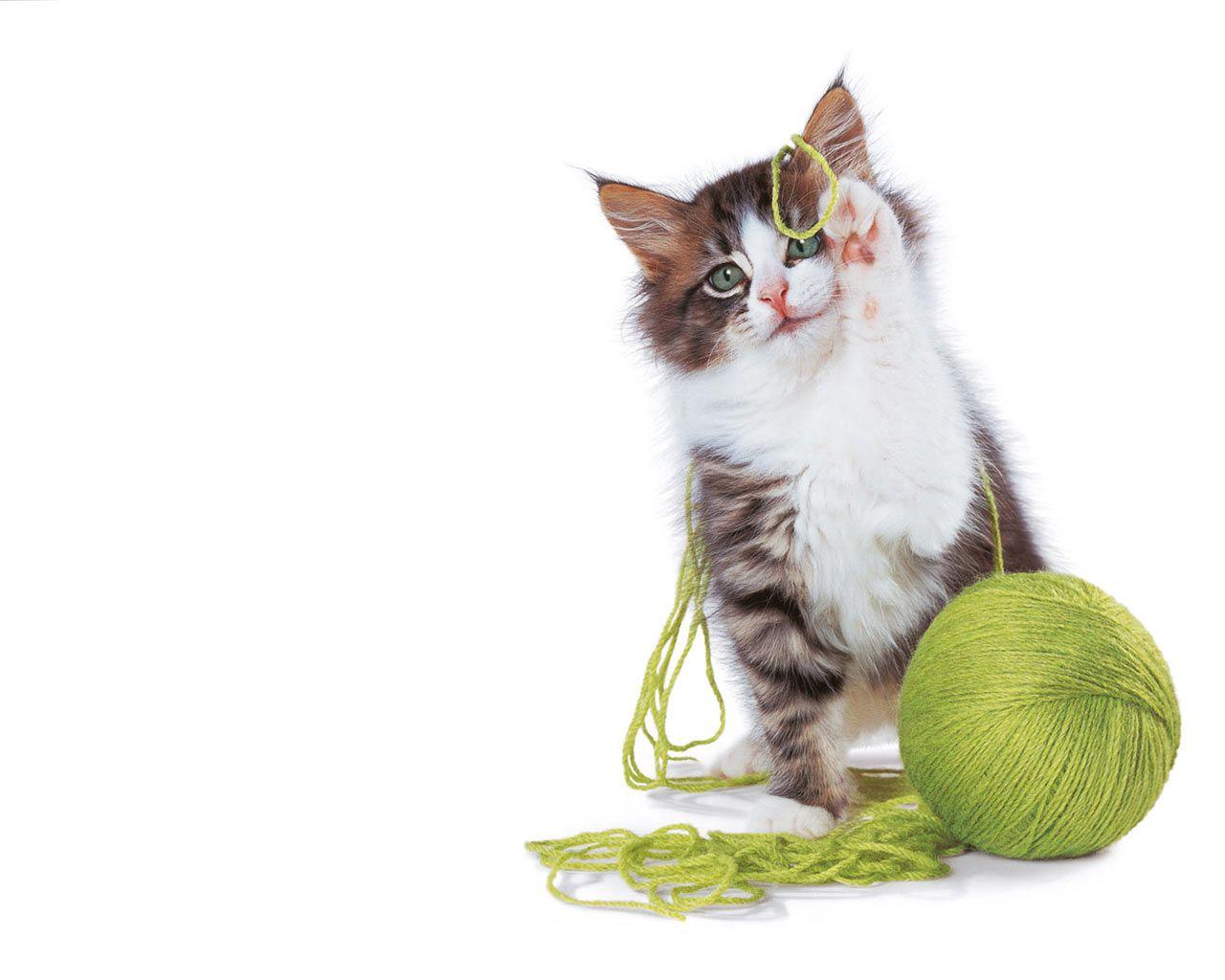 http://2.bp.blogspot.com/__CDOzUxuUaU/S9voehwvh_I/AAAAAAAAAKQ/1GFv5hHWhTw/s1600/cats%20wallpapers7.jpg