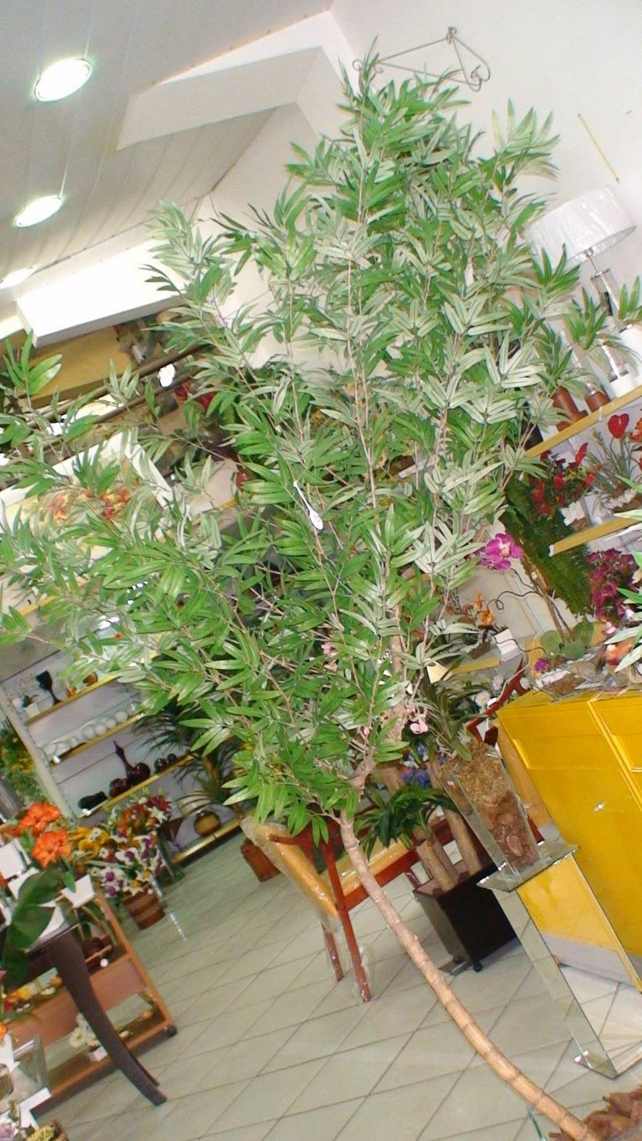 decoracao jardim bambu:DECORAÇAO DE INTERIORES: BAMBU MOSSO