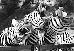 Three zebras meet their first horse (or a trio of mythemat- icians discuss a new winning strategy?)