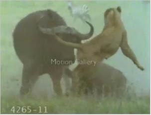 Animals Video