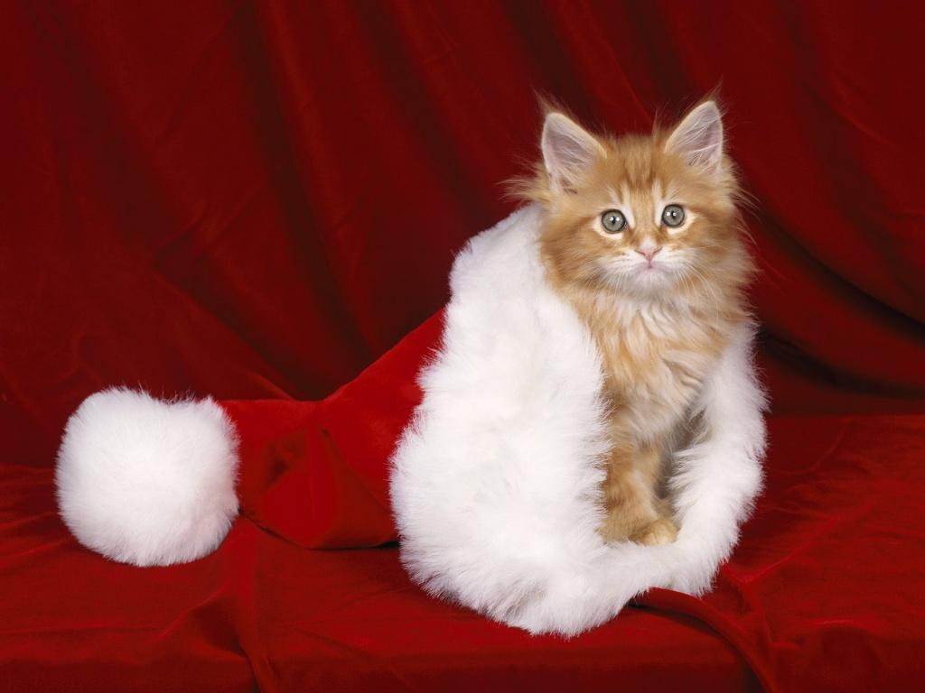 Ormai è quasi Natale! Ecco per voi un augurio speciale, con una serie di  foto di gattini tenerissimi vestiti a festa! Buon Natale!!