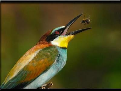 Natureza - Lindas Imagens
