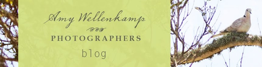 Amy Wellenkamp BLOG