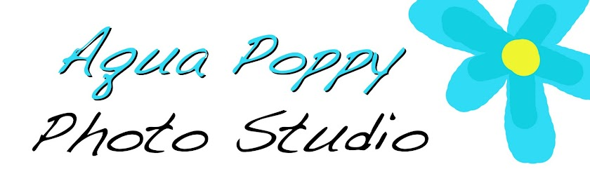 Aqua Poppy Photo Studio