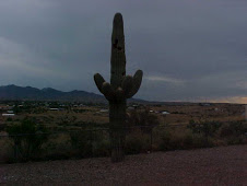 Another view of our saguaro