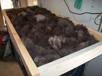 Skirting Cimarron's fleece