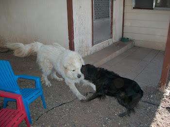 Frisky dogs