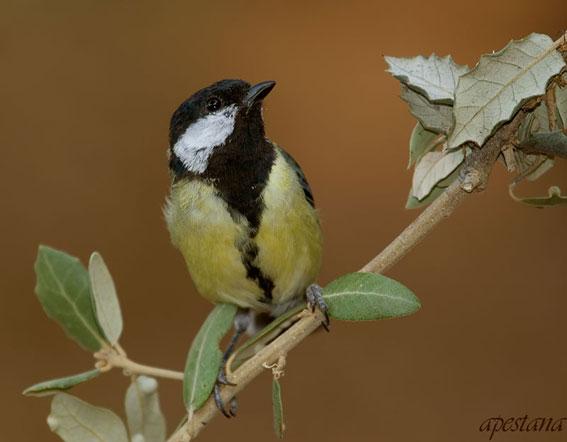 El diario de una mujer rural las aves de nuestro jard n for Aves de jardin