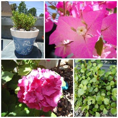 Heat Tolerant Flowers | organizingmadefun.com