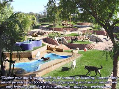 backyard dog playground related keywords suggestions backyard dog