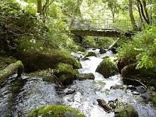 Tillicoultry Glen
